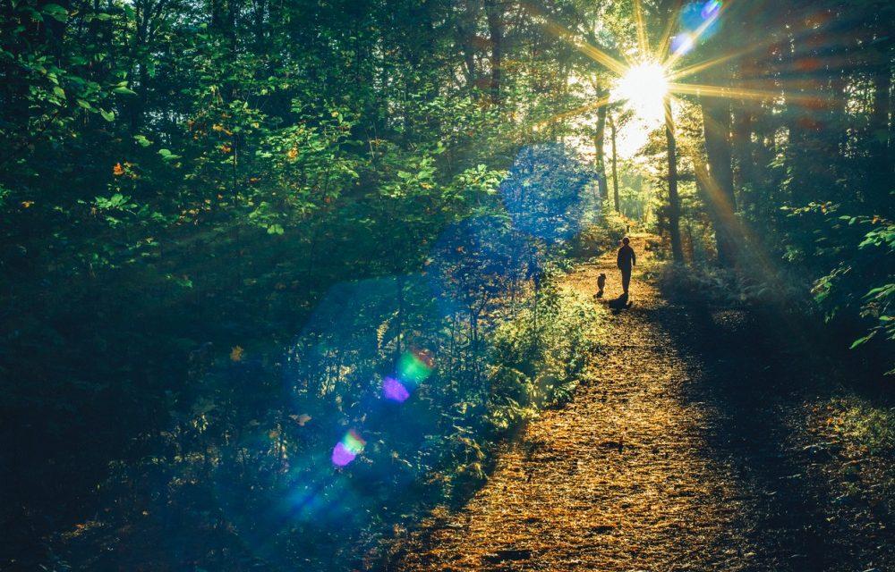 Top 10 natuurgebieden voor jou en je hond
